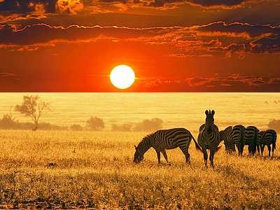 Safari Sudafricano - Salida 11 Nov