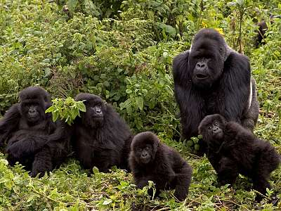 Paisajes De Kenia  Y Gorilas En La Niebla