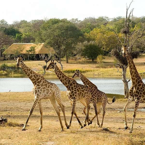 Safari Sudafricano